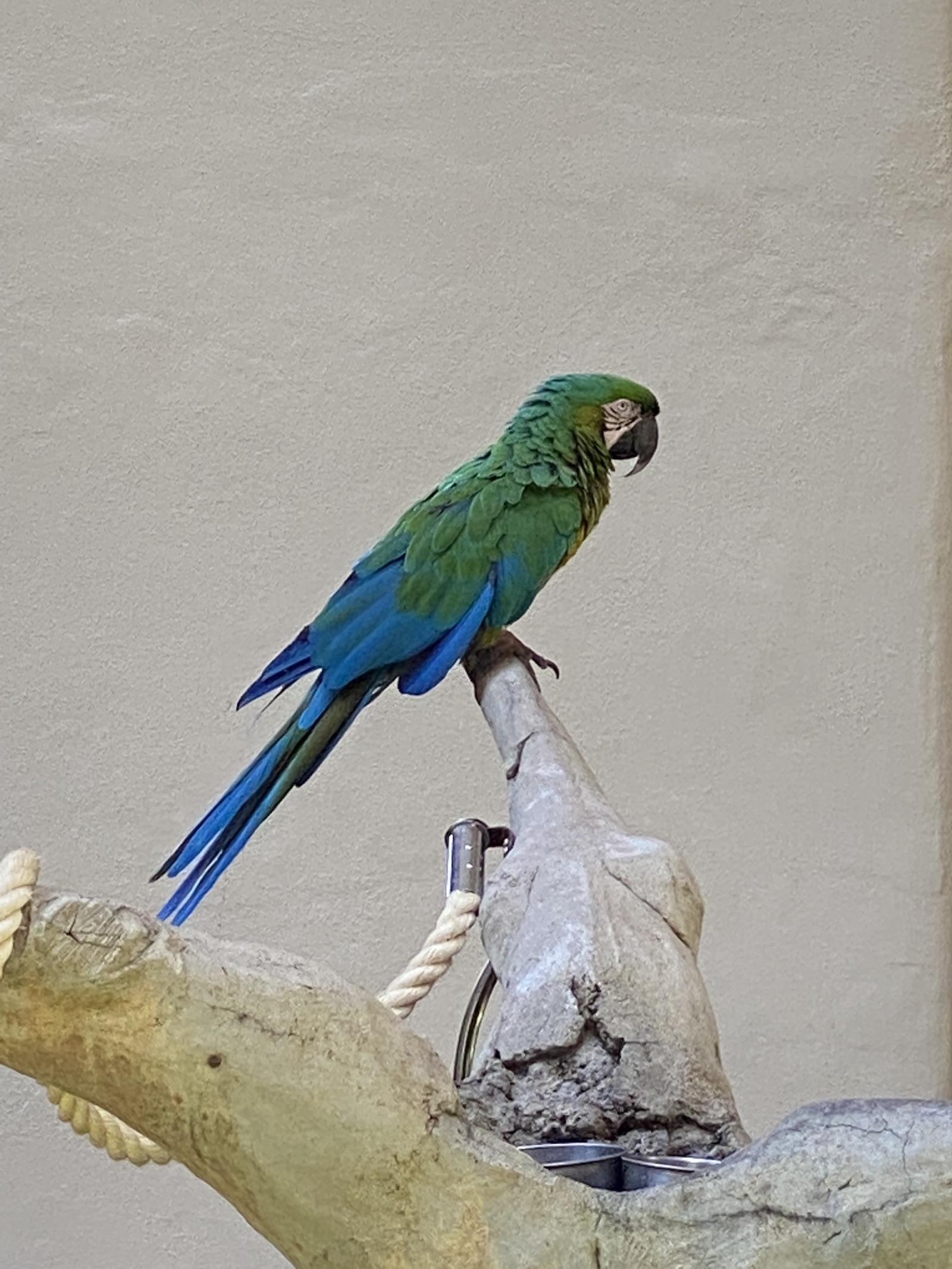 Grand Hyatt Kauai - Resident Birds